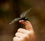 Dragonfly resting on a finger