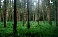 Photograph of a forest in Ireland