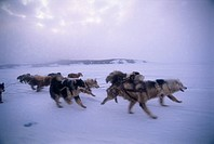 Photograph of a dog sled in snowy Canada