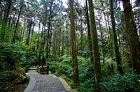 Asia, China, Taiwan, Nantou, Lugu Township, Xitou