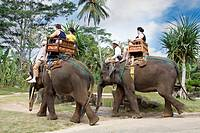 Tourists riding Sumatra's elephants, Bali, Indonesia, Asia