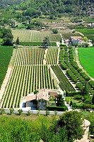 Plain of the village of Gordes, Luberon, Vaucluse, Provence-Alpes-Côte d'Azur, France