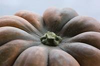 A pumpkin close_up Sweden.