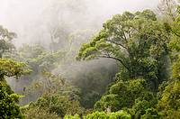 Danum Valley rainforest Sabah Borneo Malaysia