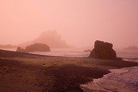 Morning fog, Cobel Beach, Yaquina Head, Oregon Coast, USA