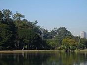 Landscape, Nature, Ibirapuera Park, São Paulo, Brazil