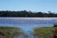 River, Pantanal, Mato Grosso do Sul, Brazil