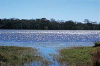 River, Pantanal, Mato Grosso do Sul, Brazil