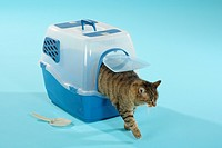 tabby domestic cat _ stepping out of transport box