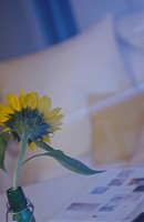 Sunflower in room