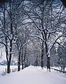 Tree lined road in winter