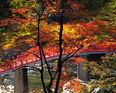 Bridge and Autumn foliage in Korankei, Japan