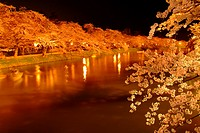 Canal lined with blossoming cherry trees at night