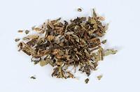 Mongolian Dandelion Herb, Taraxaci Herba, Pu Gong Ying, cut out, object