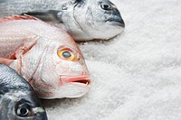 Fish on bed of salt