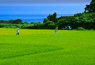 Japan, Niigata Prefecture, Sado island, rice field witn sea in background