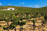 Spain, Andalusia, Cadiz Province, Jerez de la Frontera, vineyards around Jerez for the fabrication of the Fino white dry wine