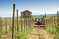 a tractor plow the soil in a vineyard during spring  dugenta  province of benevento  campania  italy  europe