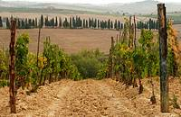 Tuscany, Italy, Vineyards - Tuscany, Italy