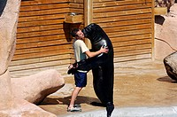 France, Moselle, Amneville les Thermes Zoo, sea lion