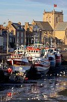 France, Manche, Val de Saire, Barfleur, port at low tide