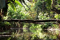 Costa Rica, Limon Province, Caribbean coast, journey on the Estrella Delta canals at 10 km from Cahuita