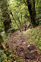 Costa Rica, Puntarenas Province, Monteverde, Reserva Biologica del Bosque Nuboso, Cloud Forest Biological Reserve
