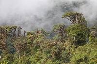Cloud forest landscape  Photographed in Panama