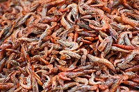 dried shrimps, China