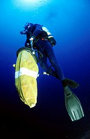 France, Corse du Sud, slow ascent of the coral gatherer with his net loaded with corals by 229.66 ft