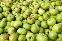 Crate of Armagh Bramley apples waiting to go into storage before being made into cider or apple tart