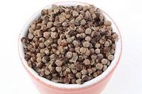 Medicinal plant Agnus castus, Chaste berry, Chastetree, Vitex agnus castus