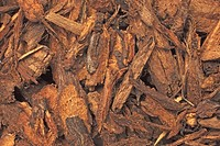 dried roots of the medicinal plant Dipsacus japonicus, Xu Duan tonifys the liver and kidney, promotes reunion of fratured bones and prevents abortion....