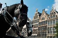 Belgium, Antwerp  Grote Markt, Restored Guildhouses and Horse