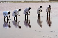 Salt lake research, Senegal. Microbiology researchers sampling water from Lake Retba the ´Rose Lake´, a salt lake in Senegal. The pink colour of the l...