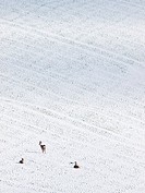 Deer in a distant snow covered field in February. Photographed in Dorset in the United Kingdom.