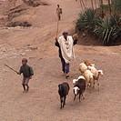 Man herding goats