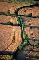 France, Vienne, wheat field near La Roche Posay aerial view