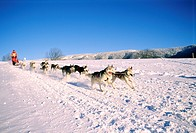 France, Isere, sled dogs in the Vercors natural regional park