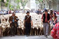 France, Bouches du Rhone, Alpilles, Saint Remy de Provence, Transhumance Festival