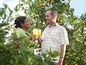 Couple In Orange Grove With Orange Juice