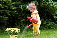 A toddler watering daisies, outdoors