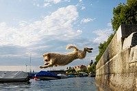 A Spanish Waterdog jumping into the sea