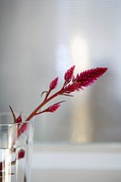 Flower in glass, close_up