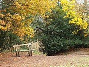Temperate woodland, bench near oak, maple and holly in autumn, Sussex, England
