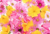 Close_up of colorful flowers