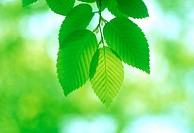 Close_up of green leaves