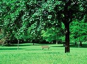 View of a park bench amid trees
