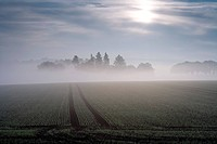 Idyllic landscape in the morning mist, Domain Beberbeck, Hesse, Germany, Europe