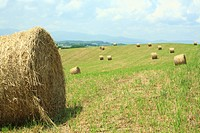 Japan, Hokkaido, Biei, Hay bales in field